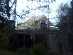 And the roof structure started going on
